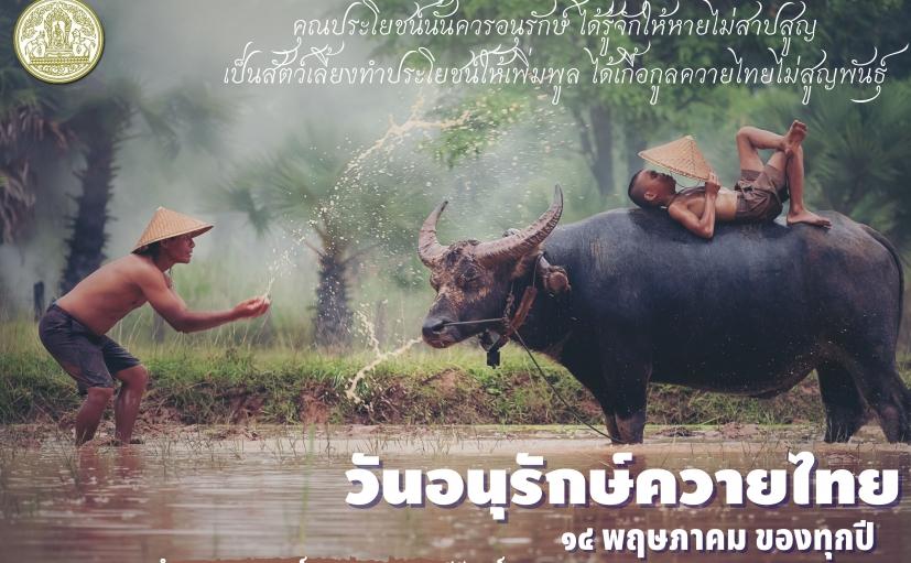วันอนุรักษ์ควายไทย